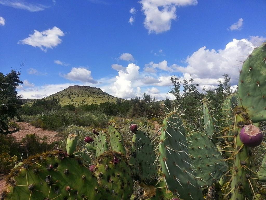 cactus-467974_1280